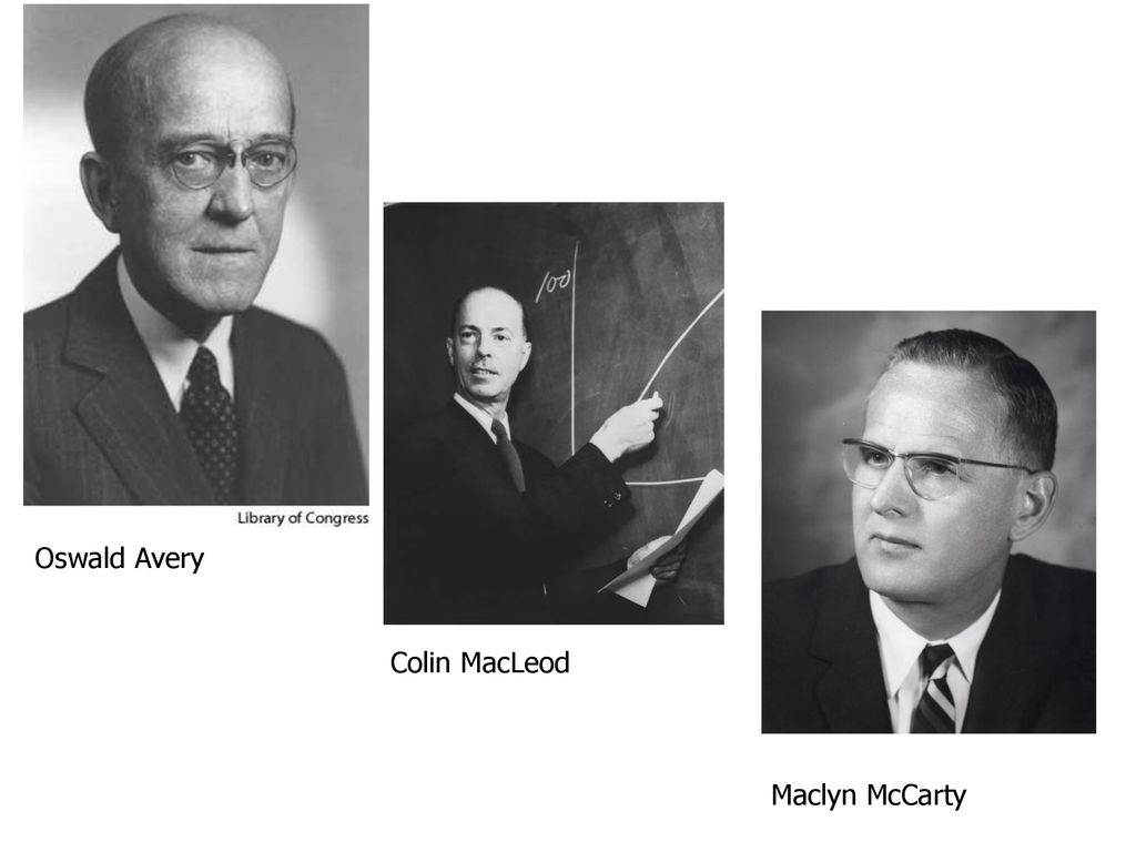 Oswald Avery, Colin Macleod et MacLynn McCarty