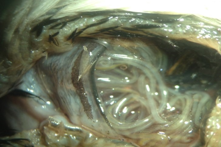Freaky friday parasite cupidon parasit strange stuff - Vers dans les cerises ...
