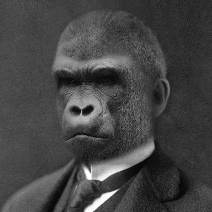 Mario Gorillini, Grand Ole Bestiary