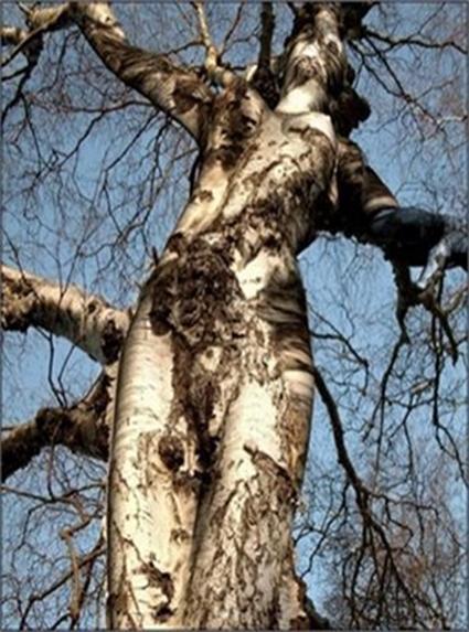 arbre femme