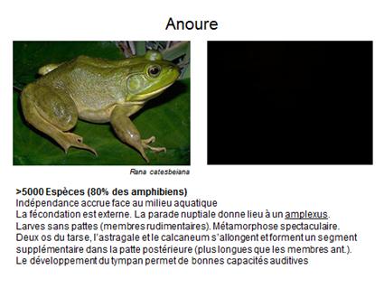Anoure