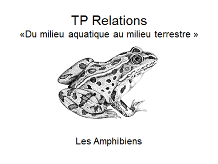 TP relations
