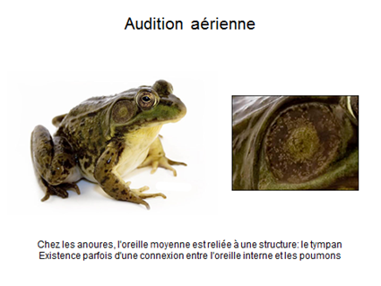 Audition aérienne