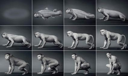 Représentation linéaire de l'évolution