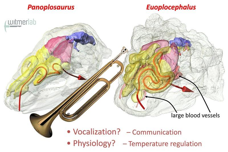 Fonction de communication pour les conduits nasaux des ankylosaures