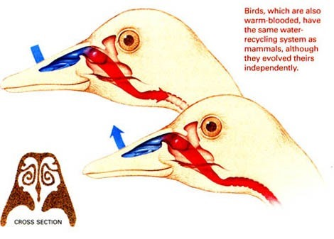 SECC d'oiseau