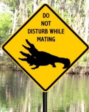 'Ne pas déranger pendant le coït' un très bon conseil