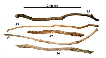 Les couverts à termites des chimpanzés