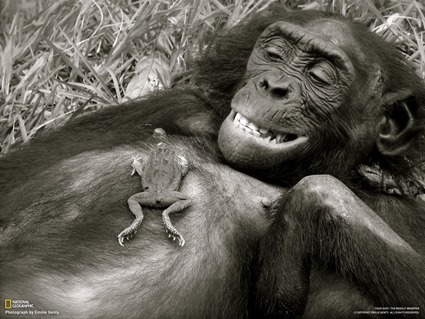 10 creepy_bonobo