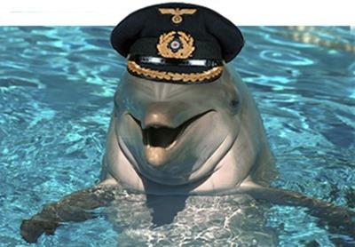 11 gay_dolphin