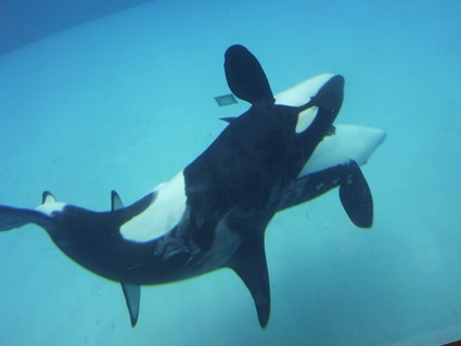 14 whale_genitalia