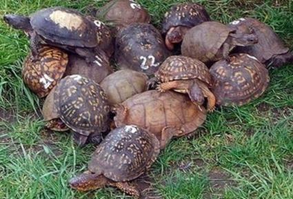 23 turtle_fun