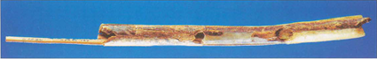 Flute d'ivoire de Mammouth de Geißenklösterle