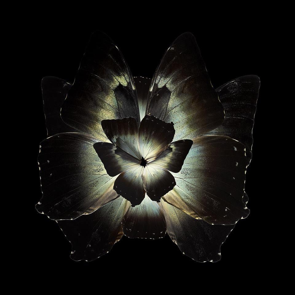 Mimesis - Tradescantia Ganymedia, 2012 Chromogenic print Format 180 x 180 cm (70,9 x 70,9 in)