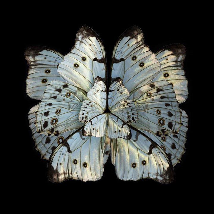 Mimesis - Hibiscus Trinium, 2012  Chromogenic print Format 180 x 180 cm (70,9 x 70,9 in)