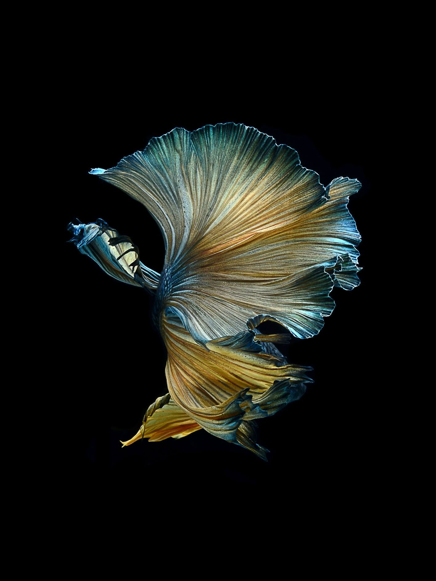 [Strange and Funky Animal Photographer] Visarute ...