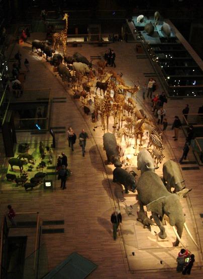 Grande Galerie de l'évolution, crédit photographique Camille Gabriel
