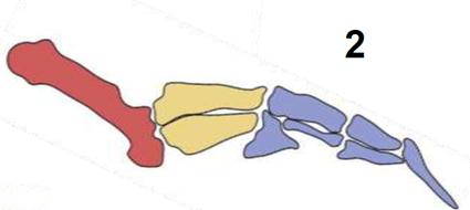 Palette natatoire de manchot