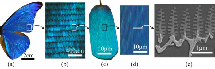 Nanostructure des écailles de Morpho