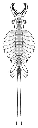 Anomalocaris saron vue ventrale, Sam Gon III