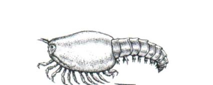Tuzoia