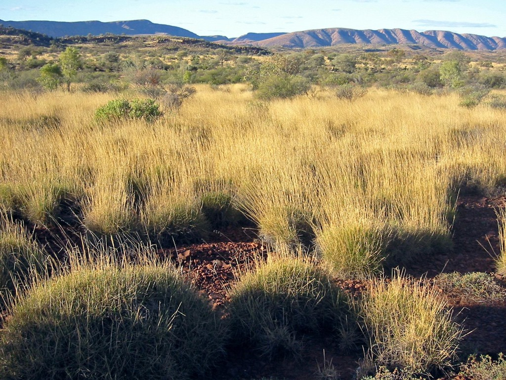 Spinifex_Savanna_Central_Australia