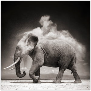 Elephant with exploding dust, amboseli, 2004, Nick Brandt