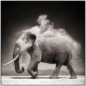 Elephant with exploding dust, amboseli, 2004, Nick Brandt