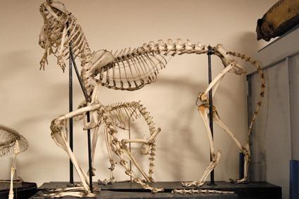 Fatras de squelettes, Photo: Marion Sabourdy