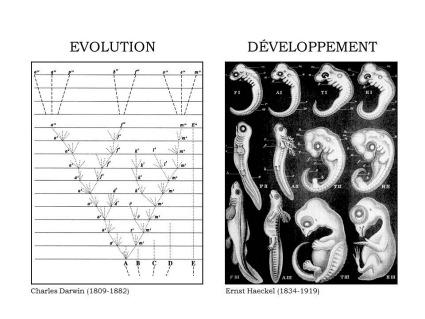 Théorie de l'évolution et récaputilationnisme