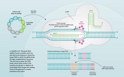 Système CRISPR/Cas9