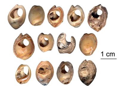 Perles en coquillages de la grotte des pigeons, Bouzouggar A et al., 2007