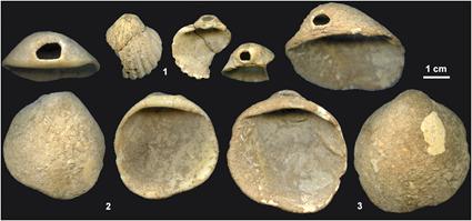 Perles en coquillages de la grotte Néandertalienne Los Aviones, Zilhao et al., 2010