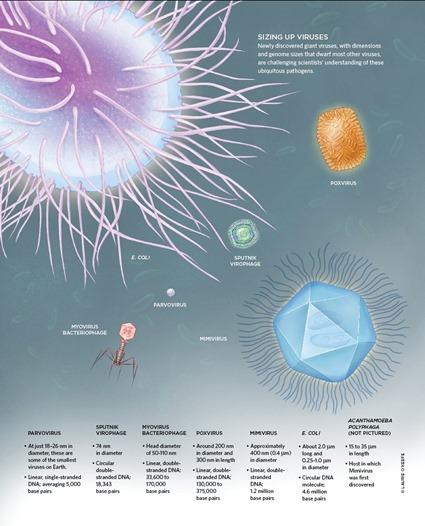 Taille des virus