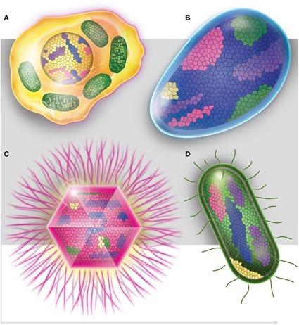 Les mosaïques génétiques du vivant