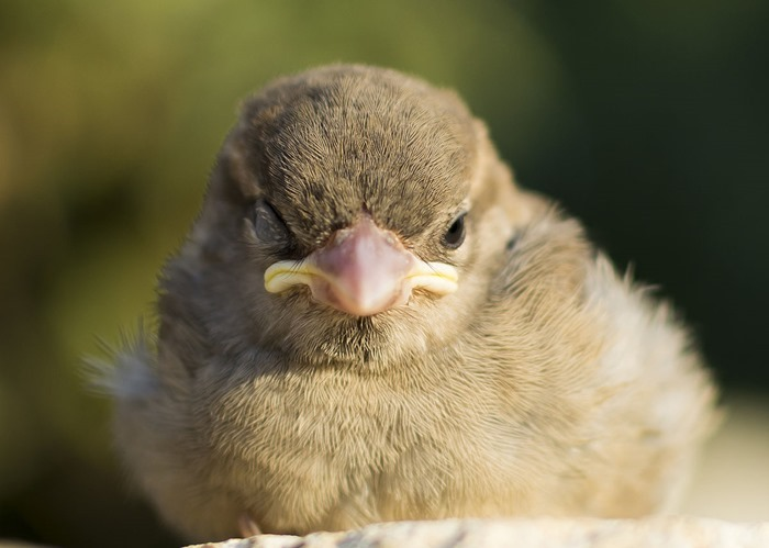 Oiseau en hémi-sommeil