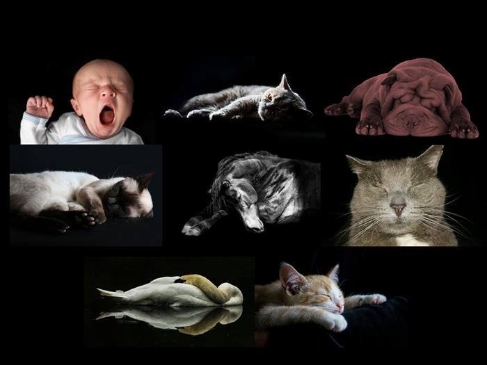 Histoires d'animaux à dormir debout