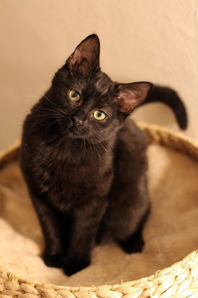 JiJi : ma plus belle chatte du monde