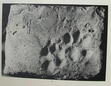 Empreintes de chat et de chien sur une brique de Chanhu-daro