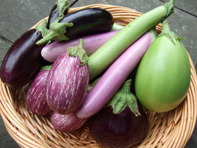 Variétés d'aubergines comestibles