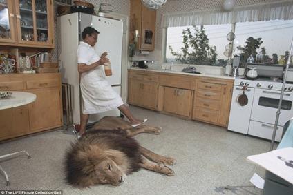 Neil, le lion de Tippi Hedren et Mélanie Griffith
