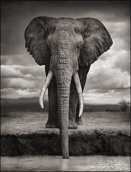 strange and funky animal photographer nick brandt. Black Bedroom Furniture Sets. Home Design Ideas