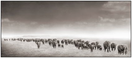 Elephant Exodus, Amboseli, 2004, Nick Brandt