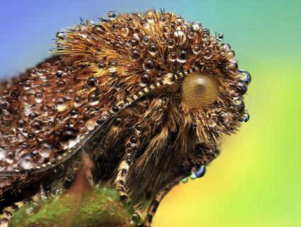 Papillon, Ondrej Pakan