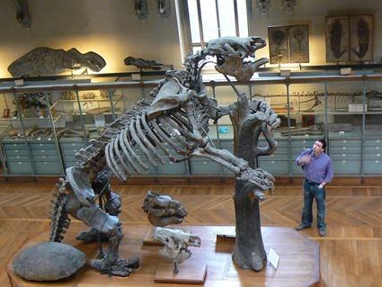 squelette de Megatherium americanum exposé au Museum National d'Histoire Naturelle à Paris