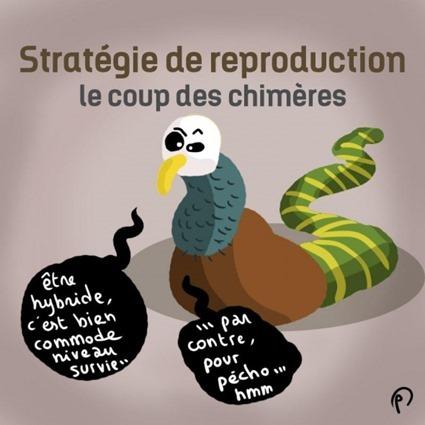 Stratégie de reproduction, le coup des chimères, Puyo