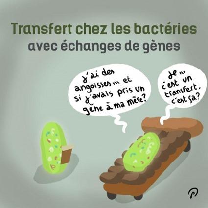 Transfert chez les bactéries avec échange de gènes, par Puyo