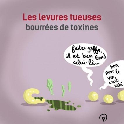 Les levures tueuses bourrées de toxines, par Puyo