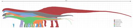 Echelle de Sauropodes