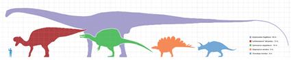 Echelle de taille entre les 5 grands groupes de dinosaures